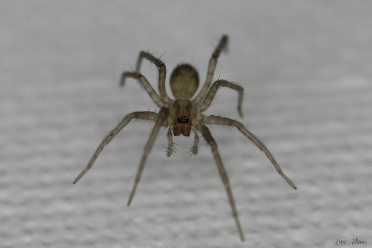 March 6 Spider